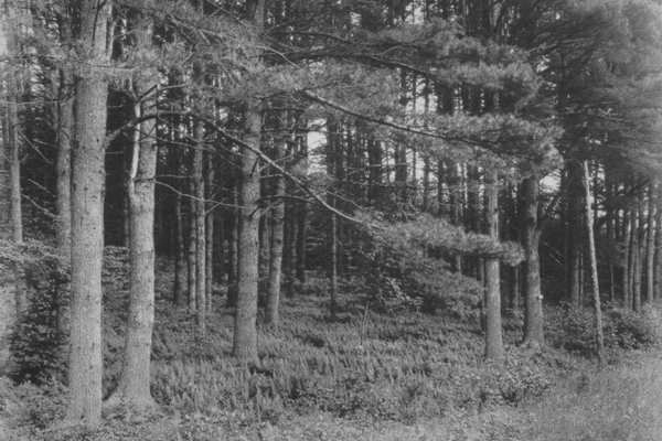 randolph-forest_resize