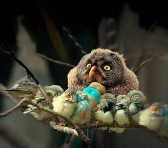 owl_resize