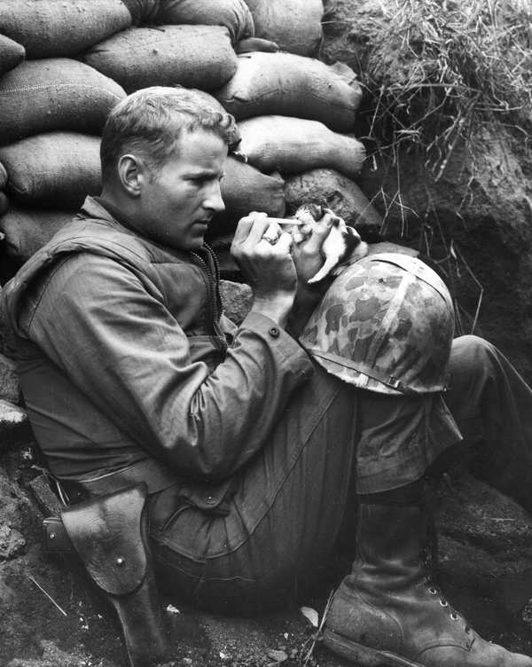 Soldier Feeds Cat
