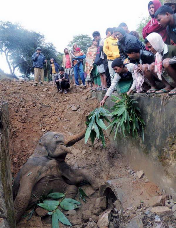 هنگامی که این بچه فیل هندی داخل گودالی از گل افتاد، مسافران قطاری که از آنجا میگذشت راننده را مجبور به توقف کردند، به حیوان بیچاره آب و غذا دادند و با کمک همگی، او را از داخل گودال بیرون کشیدند