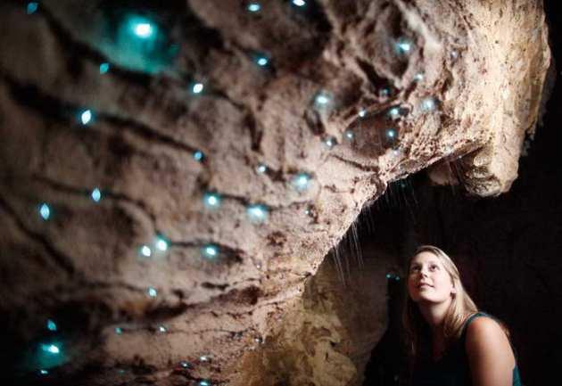 glowworm (2)