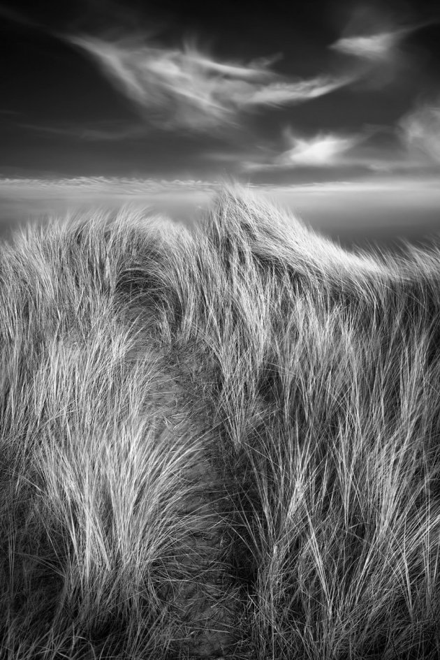 06-Jeremy Barrett - Dancing Marram_resize
