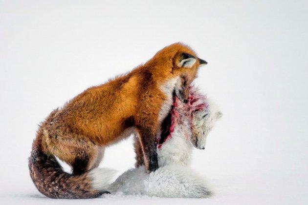 Wildlifephoto2015 (8)