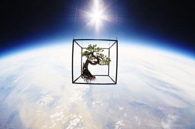 bonsaiJ (6)